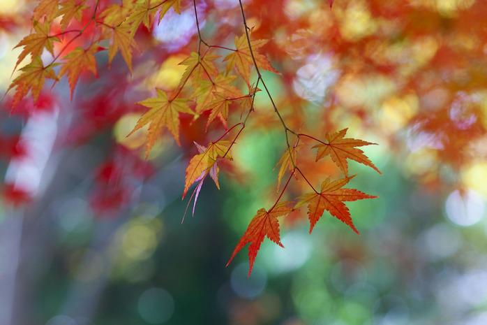 秋風と太陽