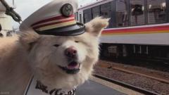 人気の秋田犬「わさお」今年度も観光駅長に 青森