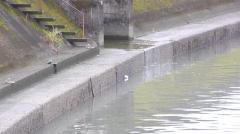 小2男児不明 川で溺れたか 友人4人は通報せず