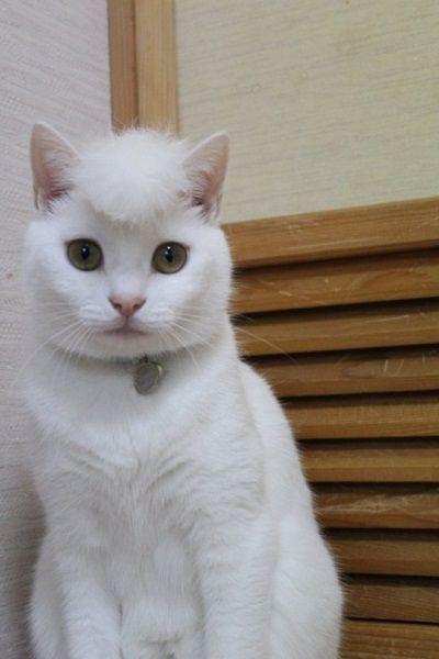 【話題】令和のなめ猫?ネコ界の氣志團?リーゼント姿のニャンコが話題
