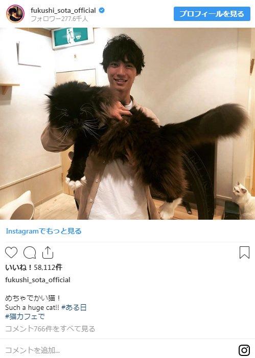 """福士蒼汰、""""めちゃでかい猫""""を抱っこする姿が話題"""