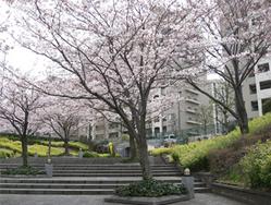 桜0404