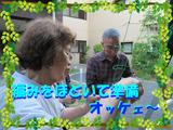 ブログ画像ゴーヤ2