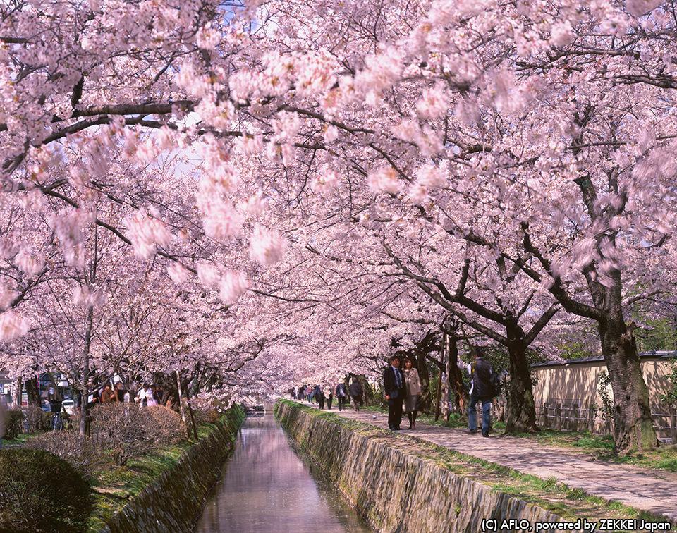 日本の桜 絶景ランキングに海外の声は…