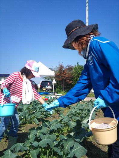 仁木農園11101625