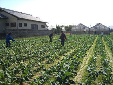 仁木農園11101639