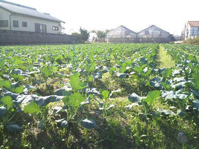 仁木農園1110165