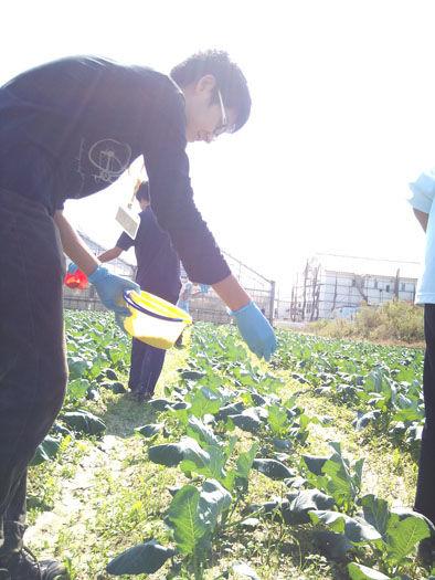 仁木農園11101622