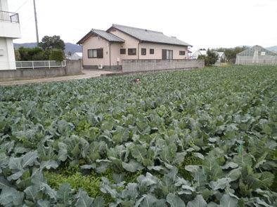 仁木農園1111022