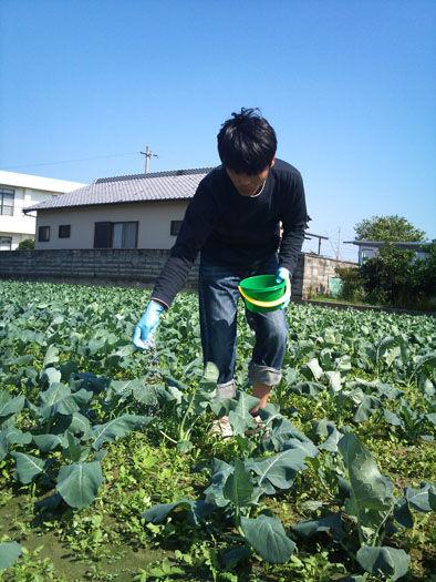 仁木農園11101624
