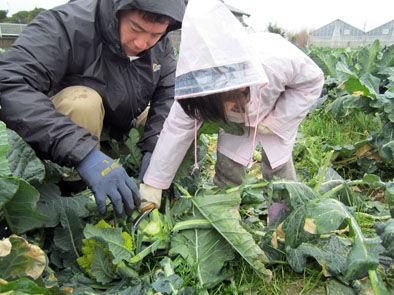 仁木農園19