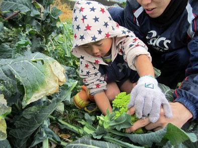 仁木農園16