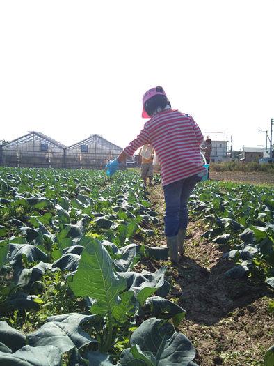 仁木農園11101627