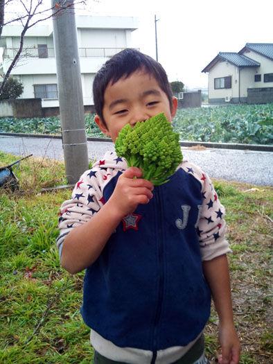 仁木農園28