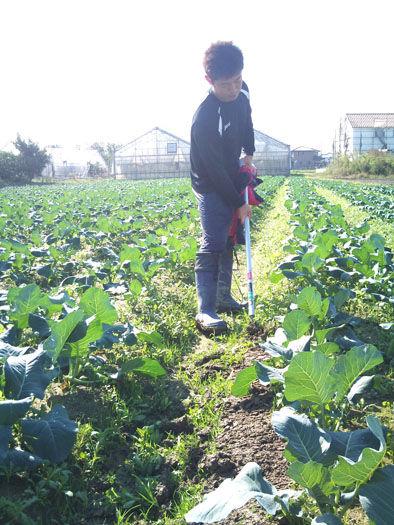 仁木農園11101610