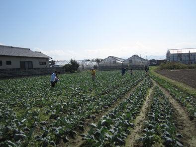 仁木農園1110166