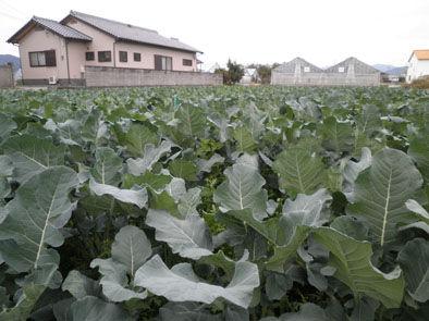 仁木農園1111025