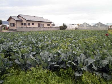 仁木農園1111233