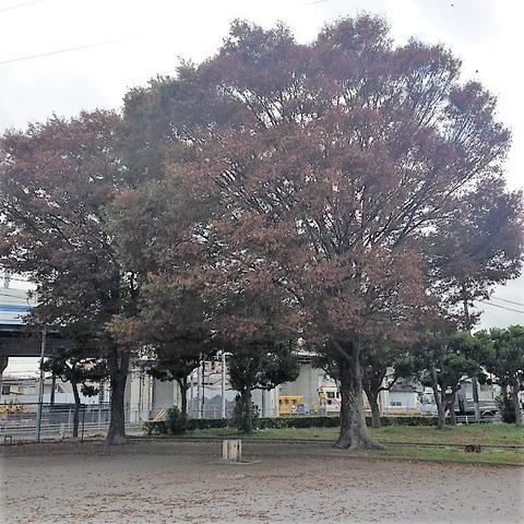 akichi01-h300929-0015-02