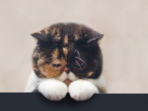 悲しい気持ち(猫)