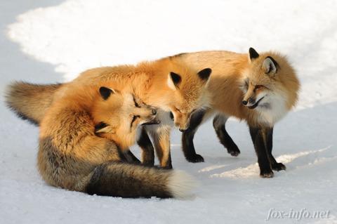 20141228_145652_foxinfonet