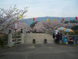 橘神社は桜満開