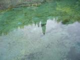 湧水の面に映る緑色が何とも綺麗