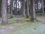 飫肥城址 本丸跡の飫肥杉の林