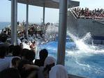 イルカの水しぶき