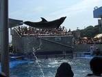 イルカのスプラッシュタイム