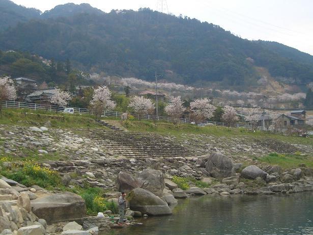 道の駅「佐賀大和」からの桜並木