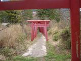 河野神社の鳥居が一杯