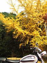 081118-名栗ツー山2