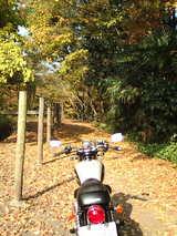 20081118-名栗ツーわき道1
