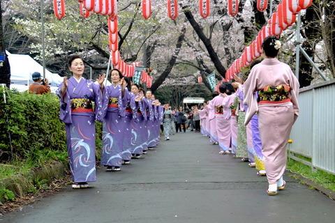 桜-2 ブログ用