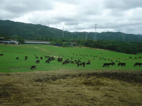 希望の牧場