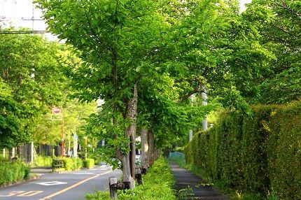 a b  緑道 (2)