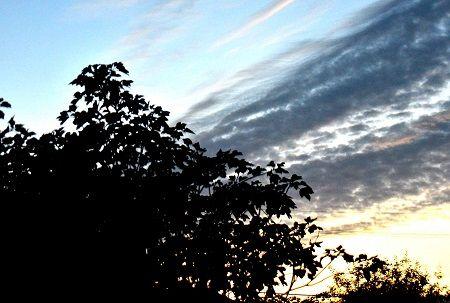 朝の雲 (2)