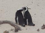 ペンギンらぶらぶ