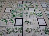 平塚市博物館植物