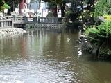 平塚八幡宮池