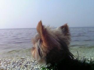 海を見つめるキョロ
