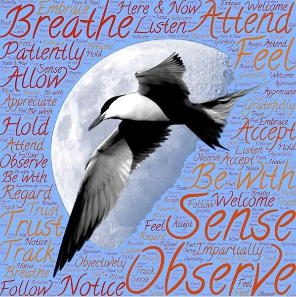 覚醒瞑想の体験と岩波英知先生の脳覚醒トランス技術