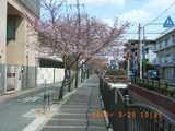 3/29-長瀬川