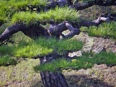栗林のカワセミ4