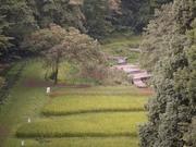 忠生公園全景