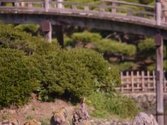 栗林公園のカワセミ2