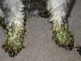 緑の足・2