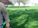 芝刈り・ジジ