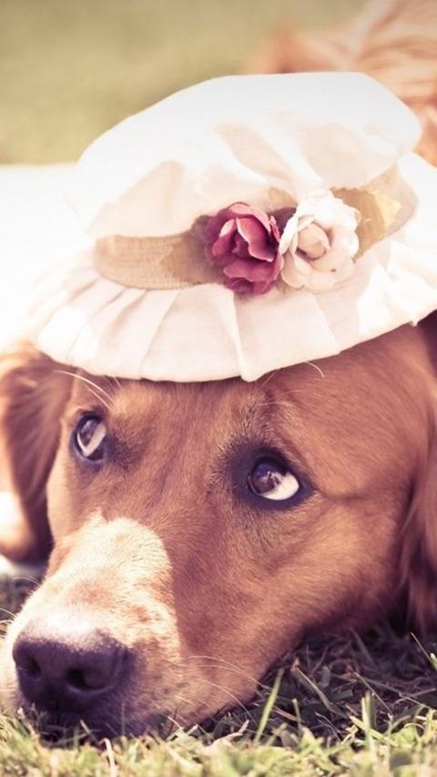 犬と帽子 Dog With Hat
